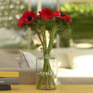 ואזה לפרחים – צודקת